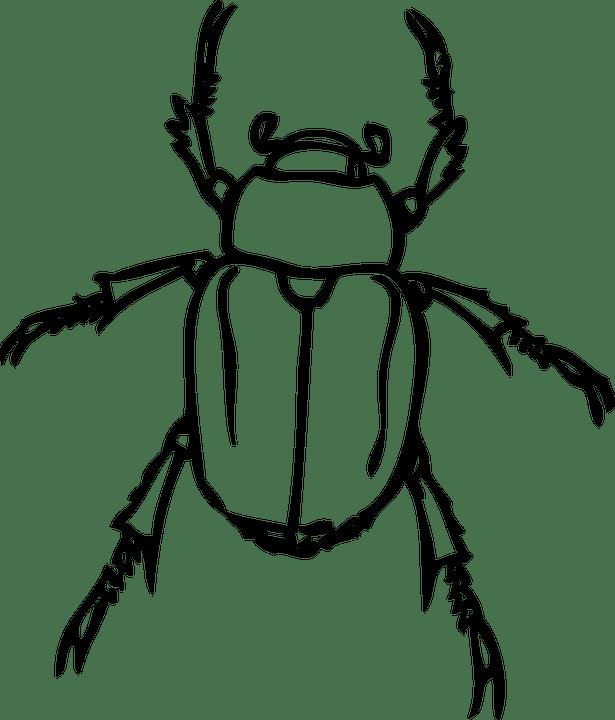 Beetle Japanese June Bug · Free vector graphic on Pixabay