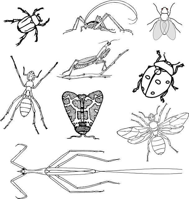Insects Bugs Beetle · Free vector graphic on Pixabay