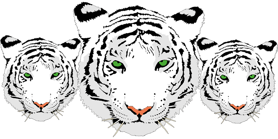 Free vector graphic: Tiger, Head, White, Bengal Tiger