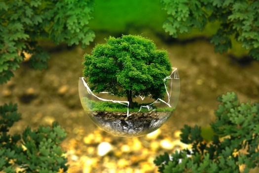 La Tutela Ambientale, Conservazione Della Natura