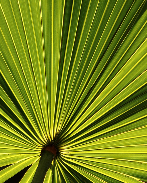 Heart Wallpaper Hd Free Download Palm Leaf Tropical 183 Free Photo On Pixabay