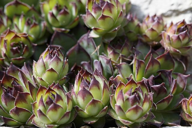 Plantes Grasses Jardin De Rocaille  Photo gratuite sur Pixabay