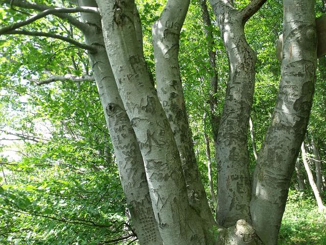Foto gratis Batang Pohon Pohon Tanaman  Gambar gratis