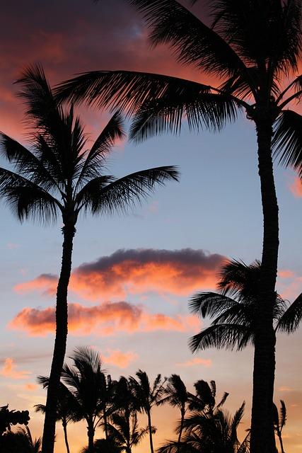 80s Car Wallpaper Palm Tree Palms 183 Free Photo On Pixabay