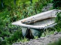 Kostenloses Foto: Badewanne, Kuhwiese - Kostenloses Bild ...