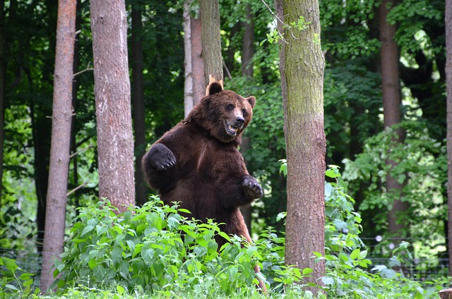 Bear Forest Eco Park 183 Free Photo On Pixabay
