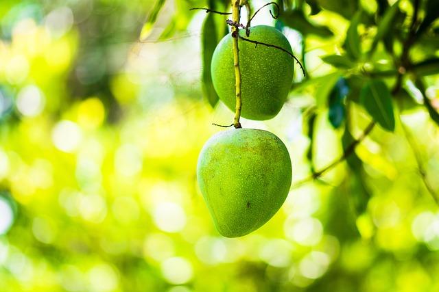 Food Wallpaper Hd Free Photo Mango Mango Tree Fruits Fruit Free Image