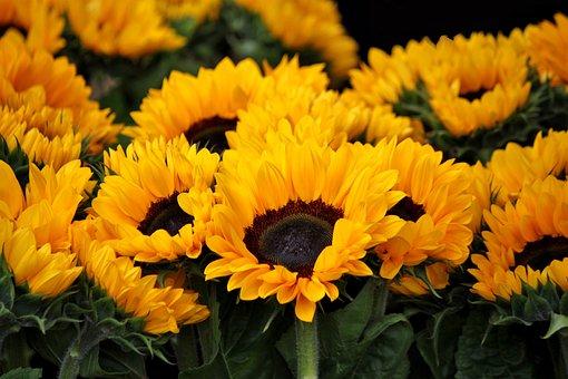 Sunflower Hd Wallpaper 1080p Sonnenblumen Kostenlose Bilder Auf Pixabay