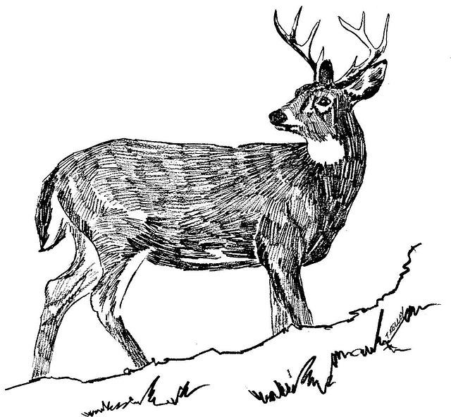 Tegning Svart Hjort · Gratis foto på Pixabay