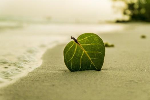 Beach, Foglia, Verde, Natura, Estate, Tropicale, Sabbia