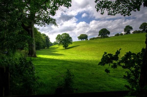 landscape spring wood free