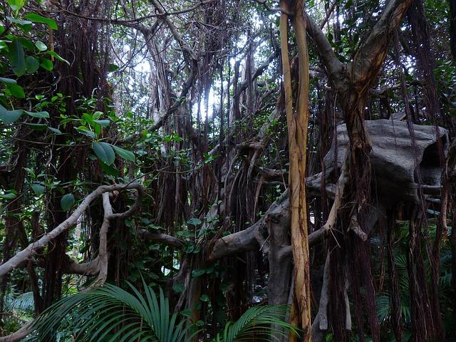 Foto gratis Rimba Gymnospermae Hutan Pohon  Gambar