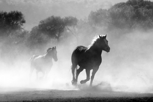 Horse, Herd, Dust, Nature, Wild, Equine, Motion, Gallop