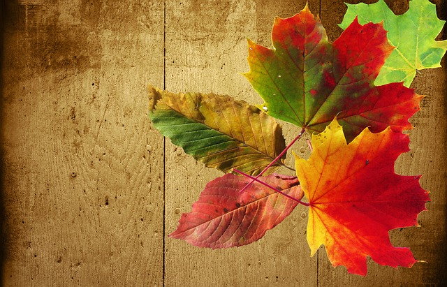 Vector Wallpaper Fall Colors Autumn Background Wood 183 Free Photo On Pixabay