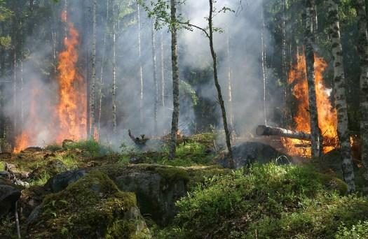 Incendio Nella Foresta, Fuoco, Fumo, Conservazione