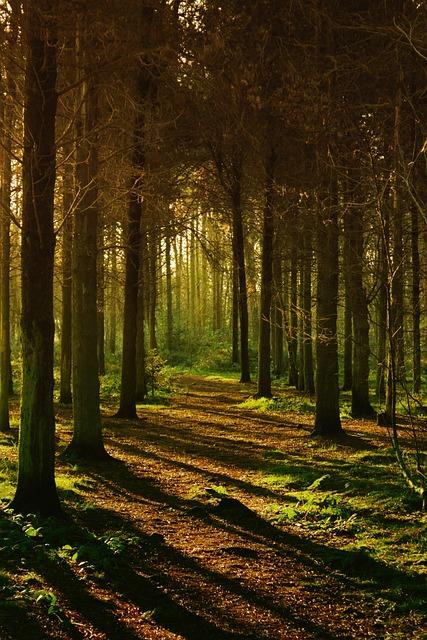 Woods Forest Nature Free Photo On Pixabay