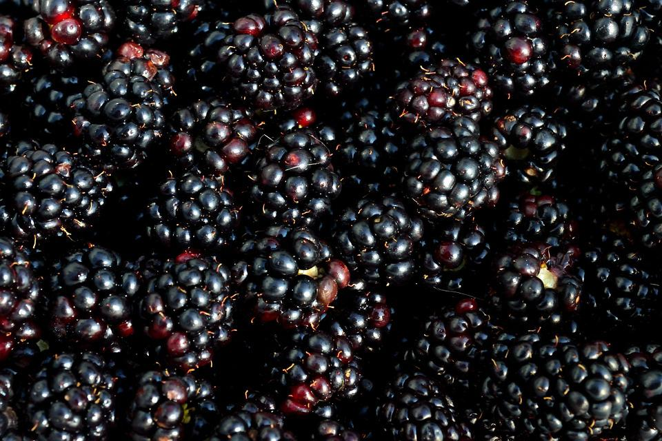 Wallpaper Fall Images Free Photo Blackberry Berry Fruit Picking Free Image