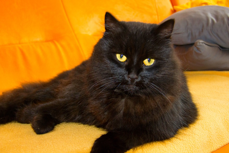 Free Photo Cat Tomcat View Animal Pet Free Image On