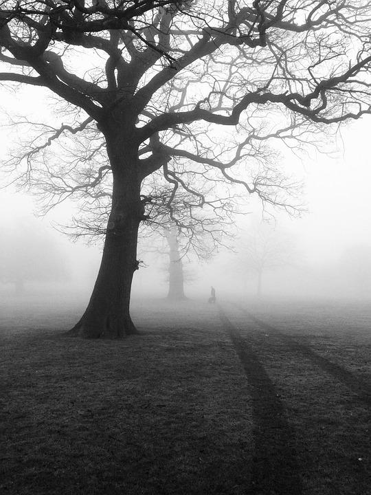 Gloomy Fall Wallpaper Trees Mist Fog 183 Free Photo On Pixabay
