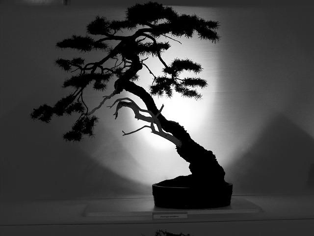 Facebook Wallpaper Fall Colors Bonsai Tree Outline 183 Free Photo On Pixabay