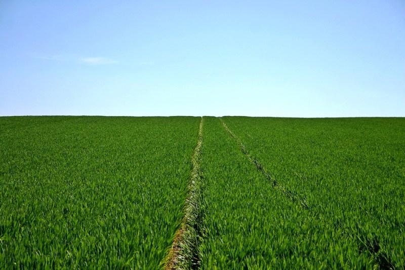 シリアル, フィールド, 緑, 空, 地平線, 農業, スプリング, 風景, 自然, 植物, 成長, 耕地