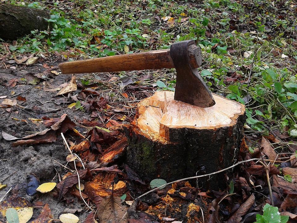 Axe, Stump, Tree, Lumberjack