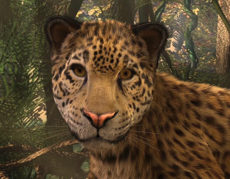 Cat Animal Wallpaper Jaguar Grands F 233 Lins Face 183 Image Gratuite Sur Pixabay