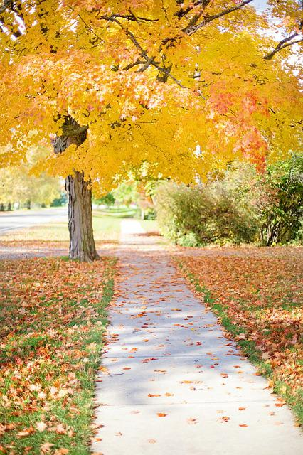 Fall Textures Wallpaper Free Photo Sidewalk Yellow Tree Walkway Free Image