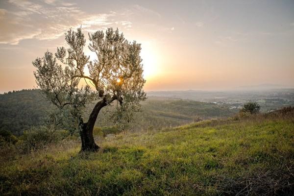 landscape tree sunset free