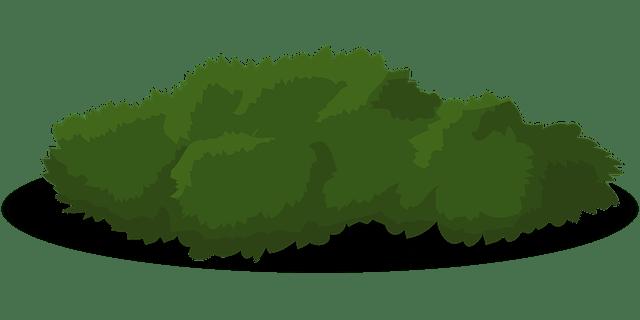 Imagem Vetorial Gratis: Bush, Verde, Arbusto, Grama