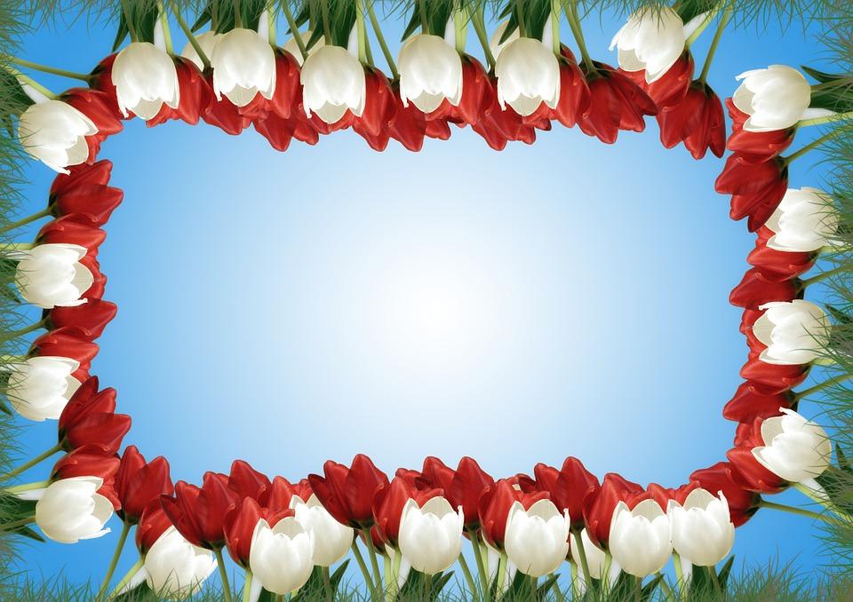 Kostenlose Illustration Blumen Tulpen Frhling Wei