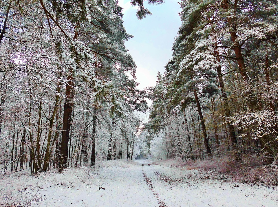 Free Photo Winter Forest Path Snow Wintry Free Image