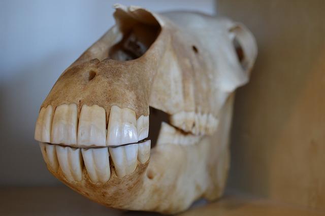 Death Girl Wallpaper Download Skull Death Horse 183 Free Photo On Pixabay