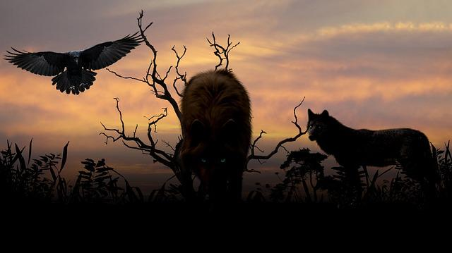Cute Poppy 1080p Wallpaper Free Photo Wolves Sunset Creepy Expensive Free Image