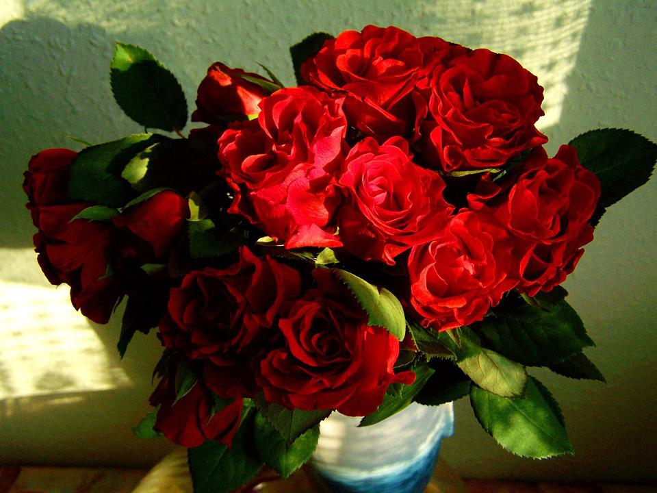 Photo gratuite: Rose Rouge. Bouquet. Fleur - Image gratuite sur Pixabay - 670648