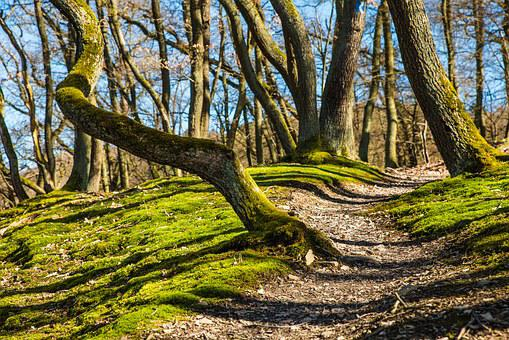 Forest, Hiking, Trail, Away, Path, Moss