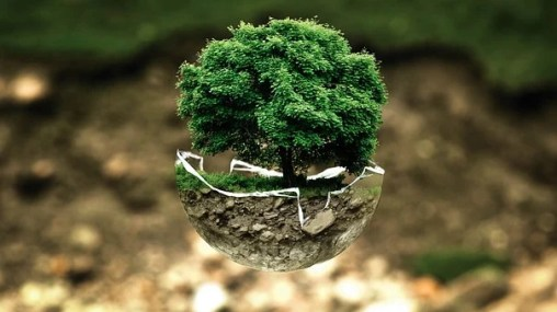 Environmental Protection, Environment, Tree, Nature, Seed grows into tree