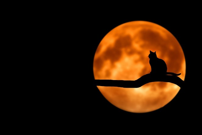 Árvore, Gato, Silhueta, Lua, Lua Cheia, Natureza, Noite