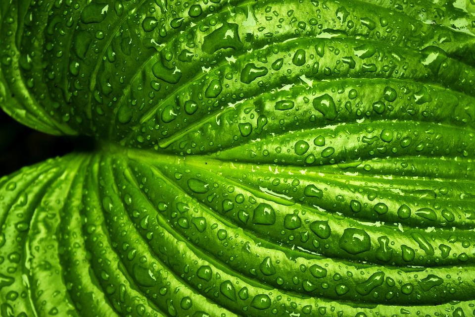 Drop Of Water Falling From A Leaf Wallpaper Free Photo Leaf Rain Spring Nature Green Free Image