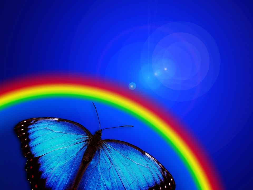 Free Fall Flowers Wallpaper Butterfly Rainbow Light 183 Free Image On Pixabay