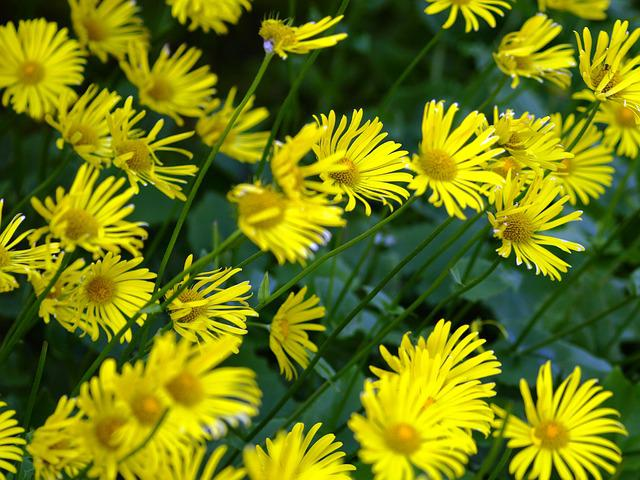 Photo gratuite Fleurs Jaune Printemps Vent  Image