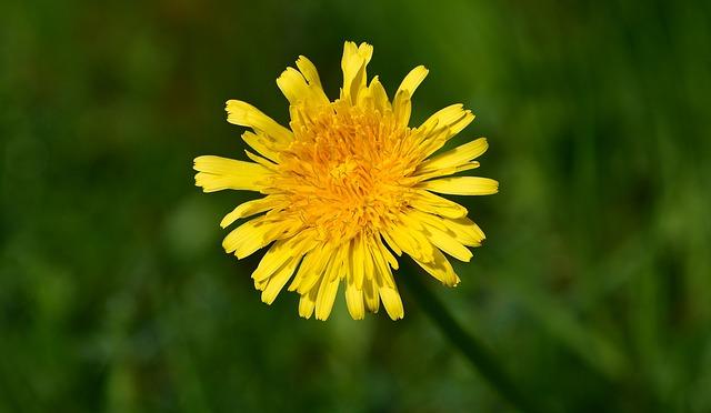 Blumen Bestimmen Foto App