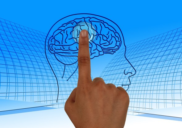 Fingerprints and Brain Connection