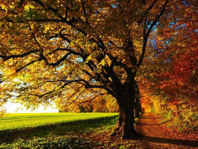 秋, 葉っぱ, 木, 道, トレイル, フィールド, 牧草地, 森, 森林, 葉, 秋の紅葉, 紅葉, 秋の色