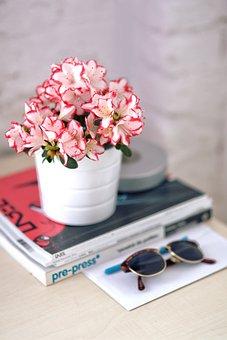 Azalea, White Pot, Sunglasses homely nature