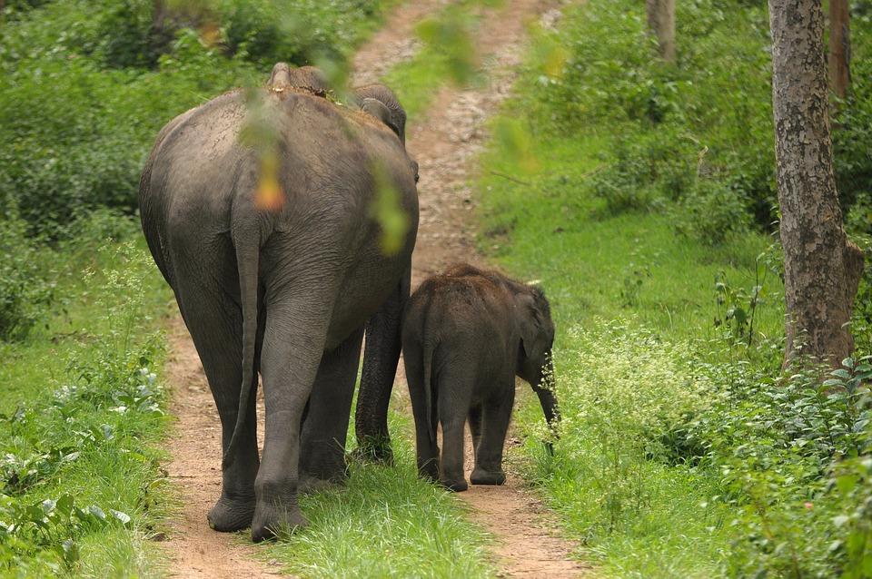 Blue Wallpaper Hd Download Kostenloses Foto Mutter Elefant Kalb Indien