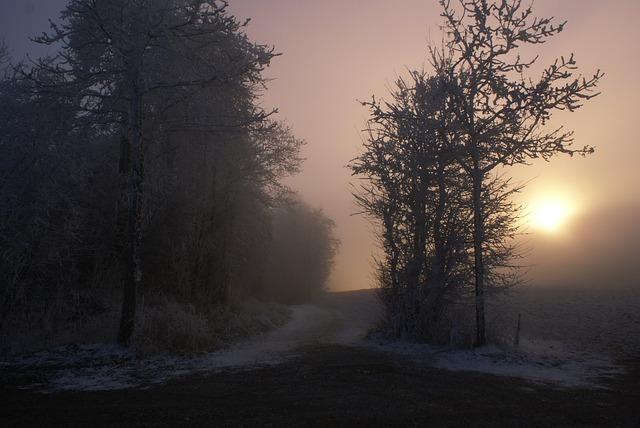 Download Sad Girl In Snow Wallpaper Autumn Mist Trees 183 Free Photo On Pixabay