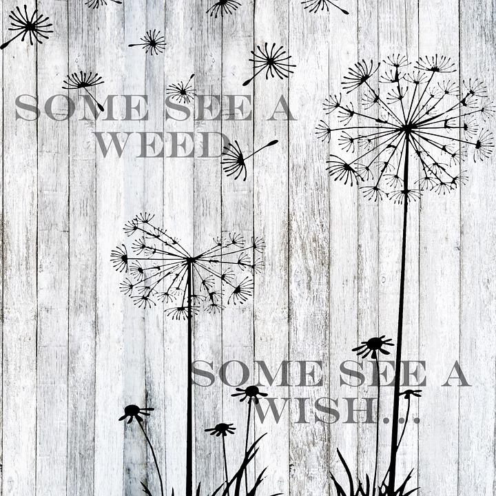 Cute Poppy 1080p Wallpaper Free Illustration Word Art Dandelion Saying Quote
