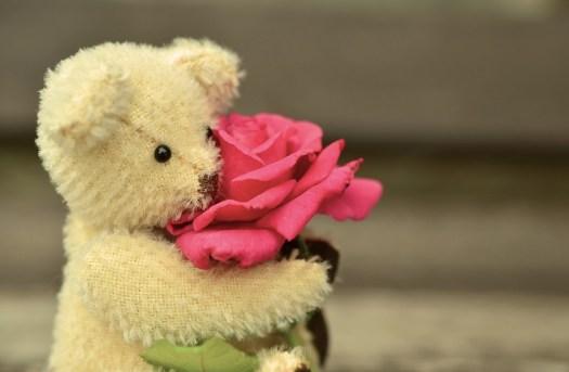 Teddy, Teddy Bear, Rosa, Amore, Greeting Card