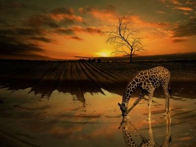 Giraffe Water Tree · Free image on Pixabay